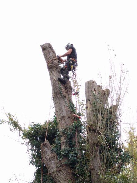 Emergency Tree Work Ealing