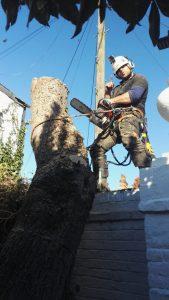 Tree Surgery Careers